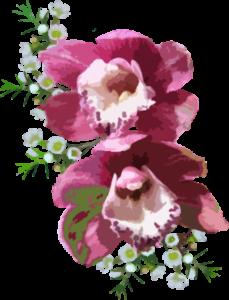 Forfait Orchidée